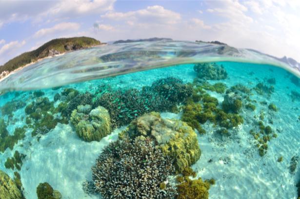 Фотообои для ванны под и над водой (underwater-world-00173)