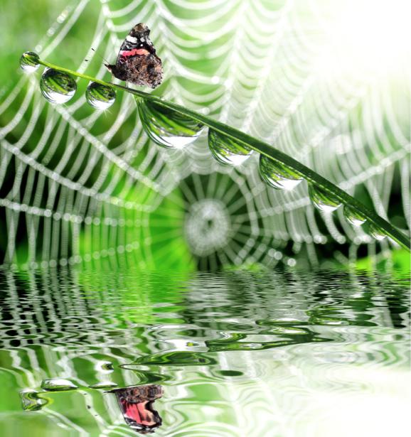 Фотообои бабочка капли росы (animals-0000336)