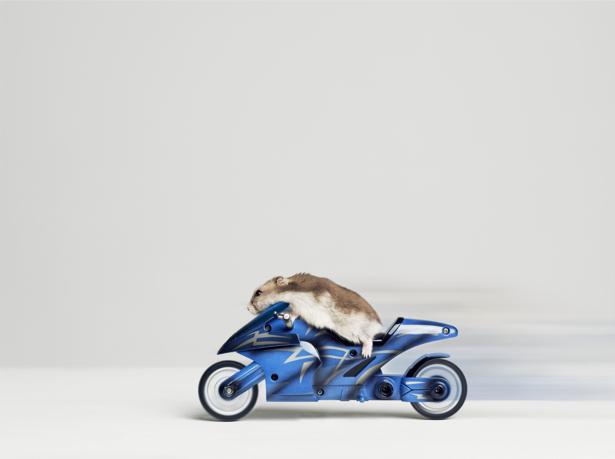 Фотообои хомячок на мотоцикле (animals-0000364)