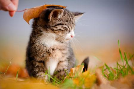 Фотообои маленький Котик (animals-0000442)