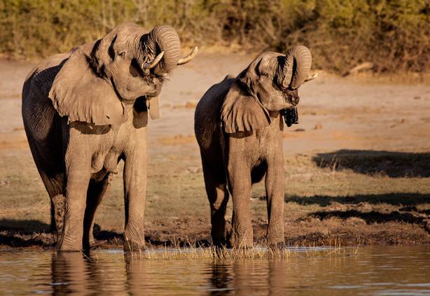 Фотообои Слоны на водопое (animals-548)