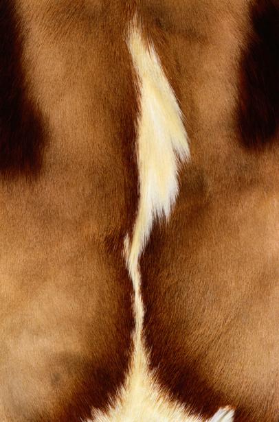 Фотообои текстура мех шкура животных (background-0000313)
