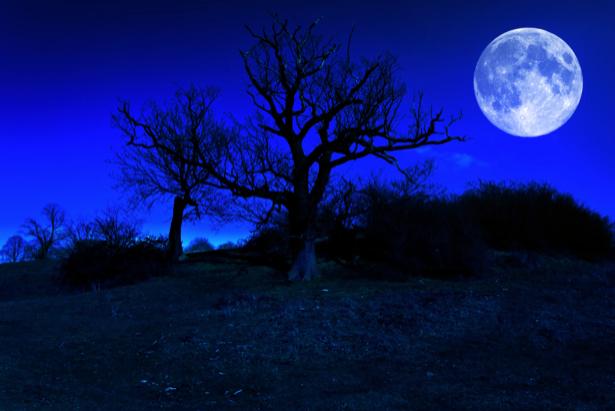 Фотообои чёрный ночной лес (fantasy-0000033)
