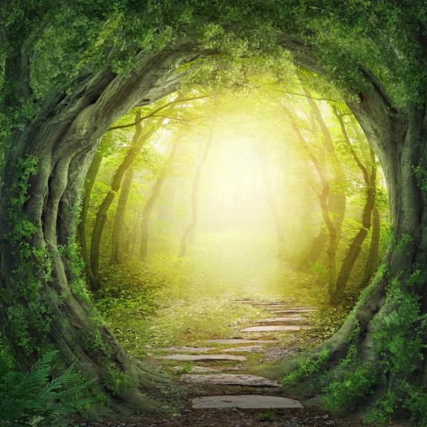 Фотообои сказочный лес деревья тунель (fantasy-0000147)