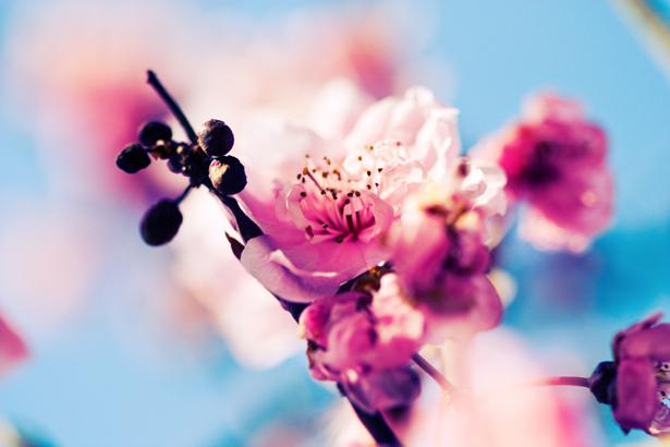 Фотообои на стену цветы Цветущая ветка (flowers-0000015)