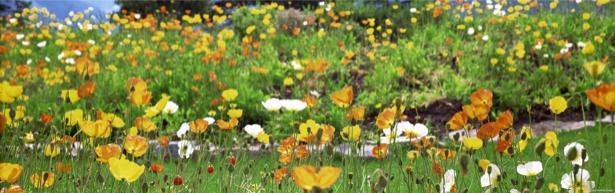 Полевые цветы готовые фотообои (flowers-0000104)