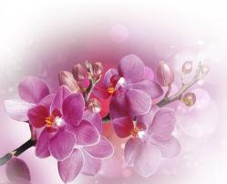 flowers-0000386