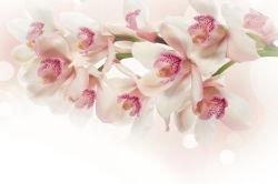 flowers-0000388