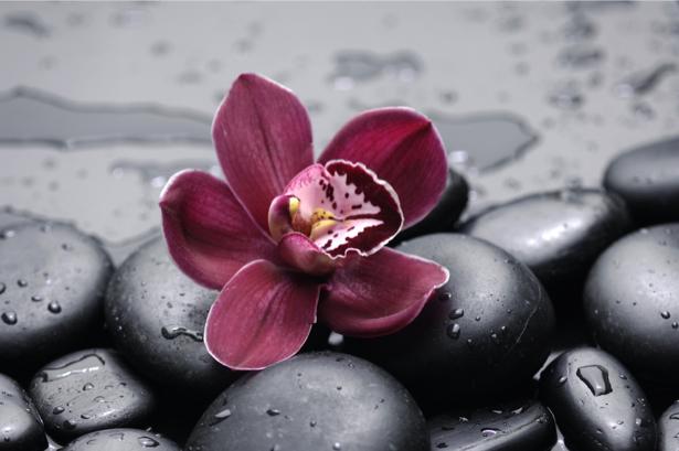 Обои фото цветок орхидея, камешки (flowers-0000551)