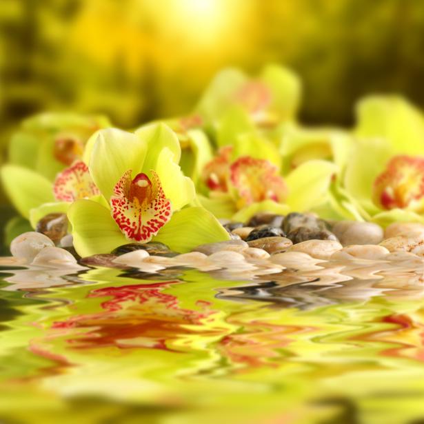 Фото обои цветы желтые орхидеи (flowers-0000557)