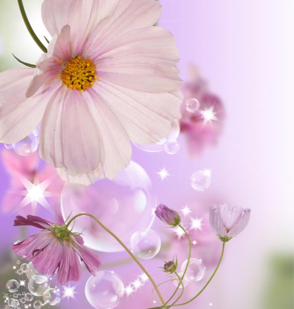 Обои на стену цветы (flowers-0000574)