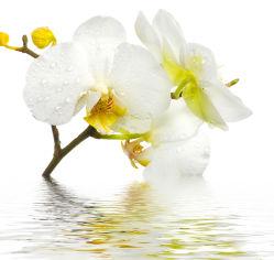 flowers-800