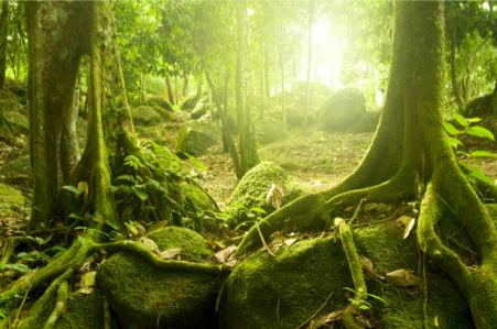 Фотообои с природой лес лесная чаща (nature-00004)