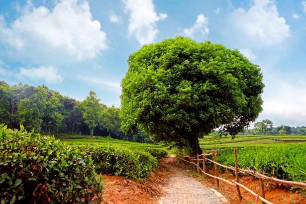 Фотообои дорога поле лес (nature-0000642)
