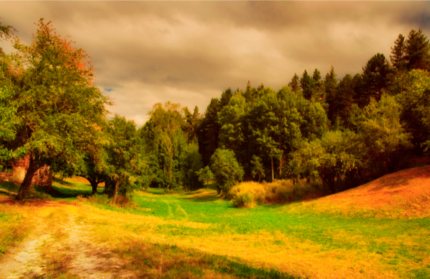 Фотообои лес перед грозой дорога поле (nature-00191)