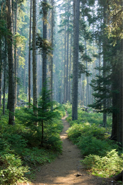 Фотообои вертикаль дорога лес (nature-00232)