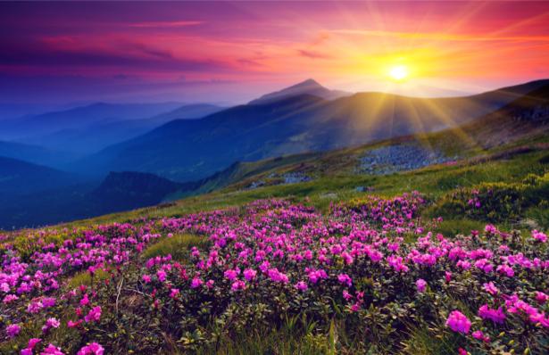 обои для рабочего стола природа цветы № 509959 без смс