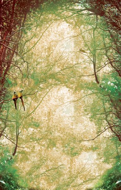 Фотообои в лесу птички (printmaking-0000099)