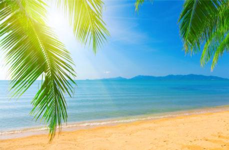 Фотообои море берег пальмовые ветви (sea-0000311)
