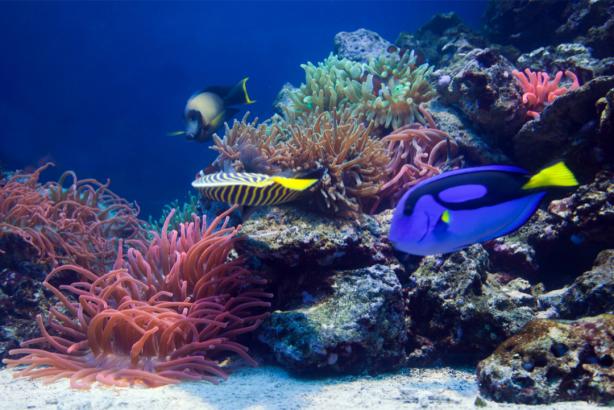 Фотообои для ванной коралловый риф (underwater-world-00194)