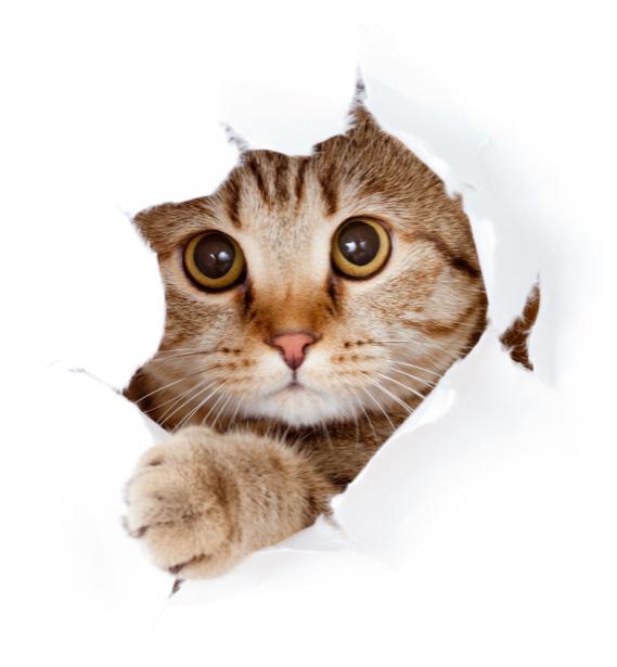 Фотообои кот или кошка прорвался (animals-0000166)