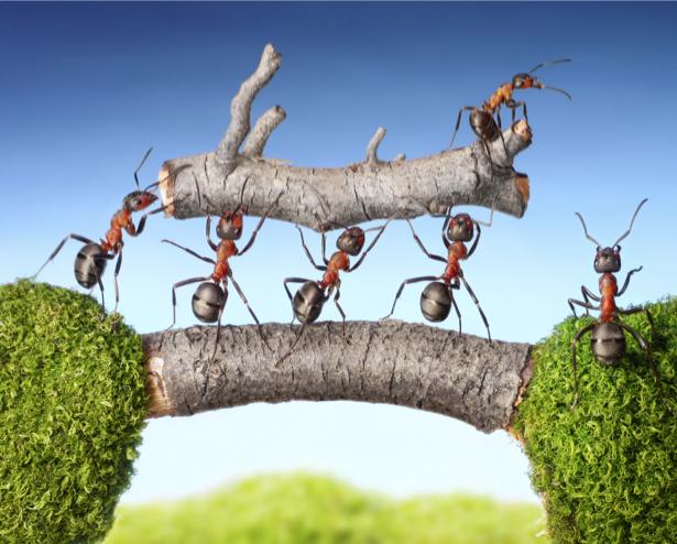 Фотообои муравьи несут дерево (animals-0000327)