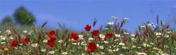 flowers-0000103