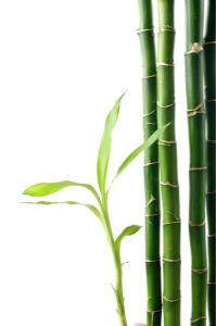 Бамбук - Фото обои на стену (flowers-0000255)
