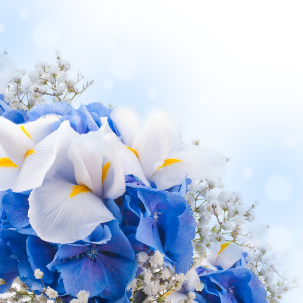 Обои фото цветы Ирисы (flowers-0000441)