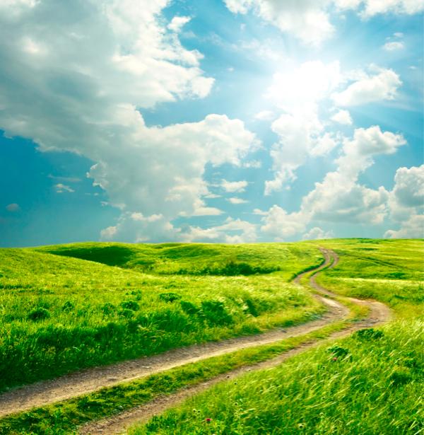 Фотообои виды природы поле дорога (nature-00180)