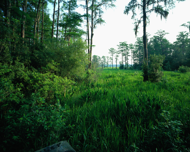 Фотообои лес ландшафт мотив натура (nature-00218)