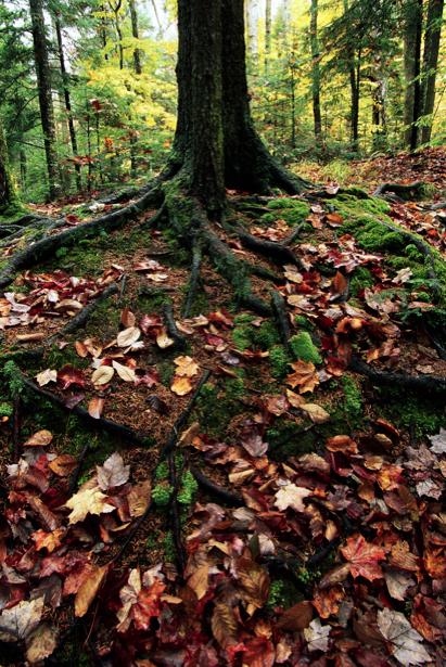 Фотообои листа на корнях лес (nature-00286)