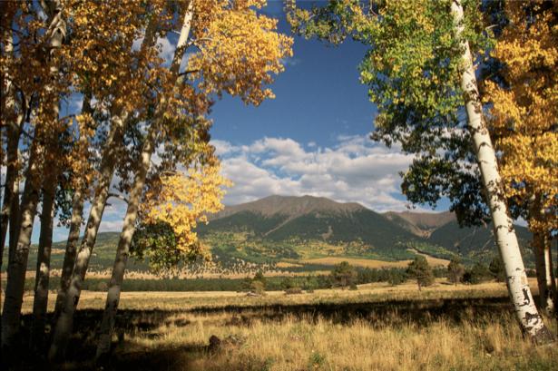 Фотообои горы лес березы (nature-00354)