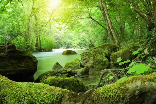 Фотообои зеленый лес озеро (nature-00512)