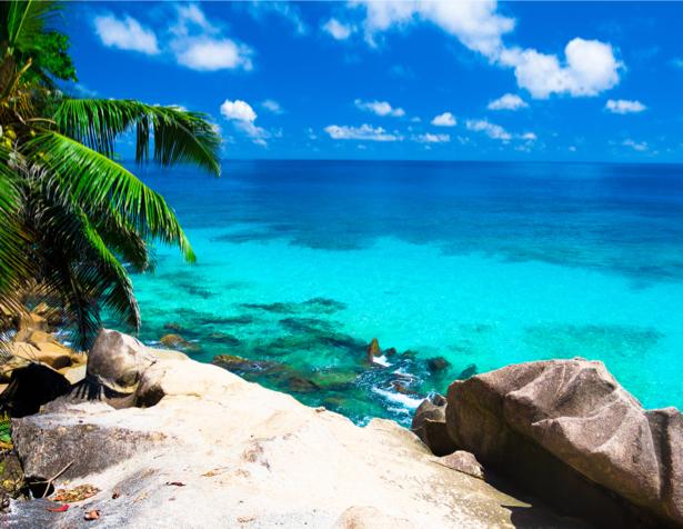 Фотообои пальмы и морская гладь (sea-0000178)