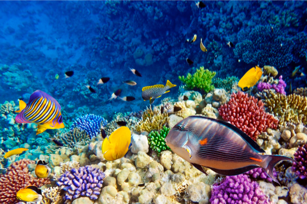Фотообои ванная рыбки 3д море (underwater-world-00023)