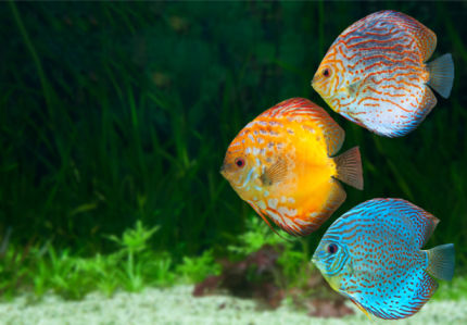 Фотообои для ванны рыбки (underwater-world-00202)