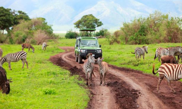 Фотообои с природой саванна зебры (animals-0000007)