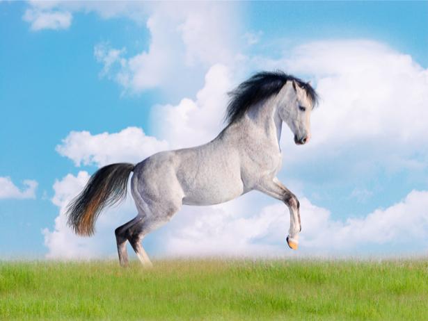 Фотообои белый конь в поле небо (animals-0000042)