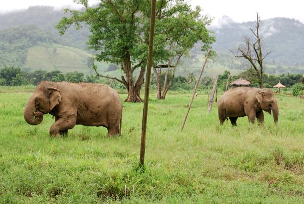Фотообои с природой слоны (animals-0000098)