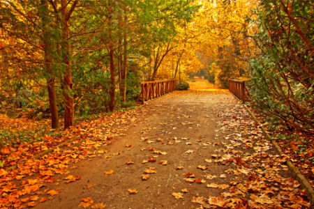 Мост в осеннем парке фотообои (city-0001372)