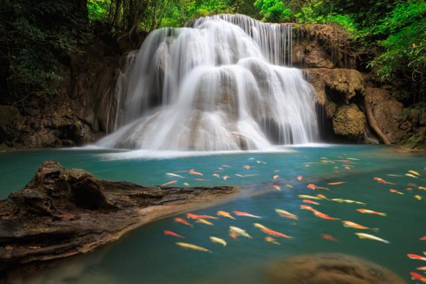 Фотообои водопад лес рыбки (nature-0000732)