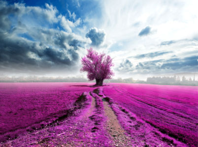 Фотообои розовое цветущее поле (nature-0000824)