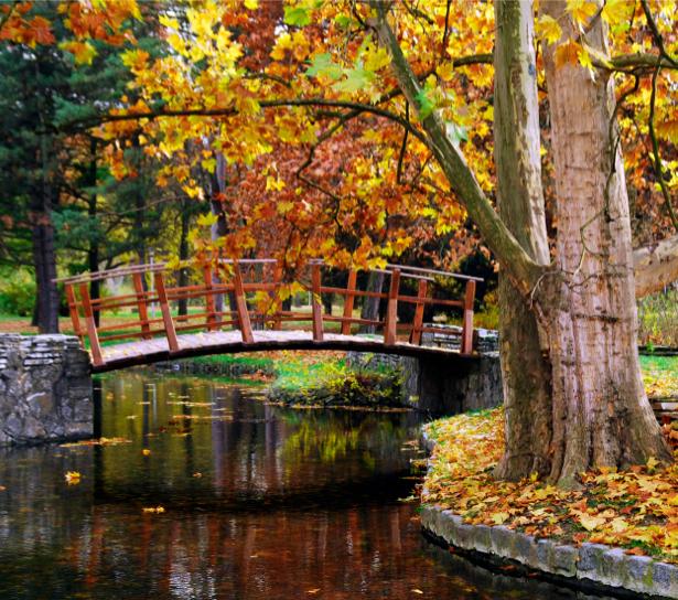 Фотообои парк мост река осень (nature-00411)