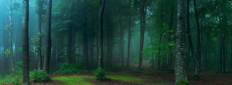Фотообои Лес в тумане (nature-901)