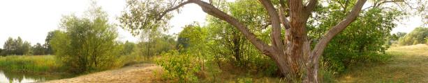 Фотообои лесная панорама дерево (panorama_0000024)