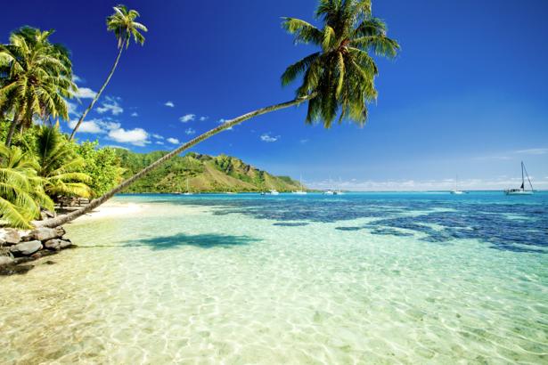 Фотообои море берег остров пальмы (sea-0000305)