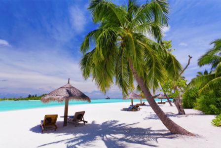Фотообои море тень от пальмы (sea-0000332)