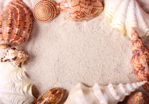 Красивые морские ракушки песке обои (underwater-world-00082)
