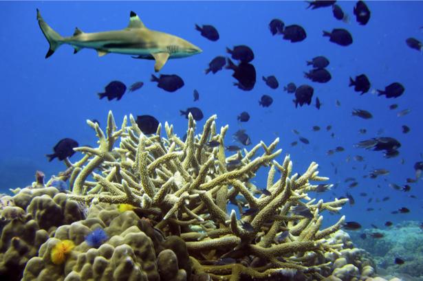 Фотообои для ванны кораллы акула (underwater-world-00134)